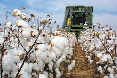 Μέχρι 5 Μαρτίου η πληρωμή της Συνδεδεμένης Ενίσχυσης στους βαμβακοπαραγωγούς