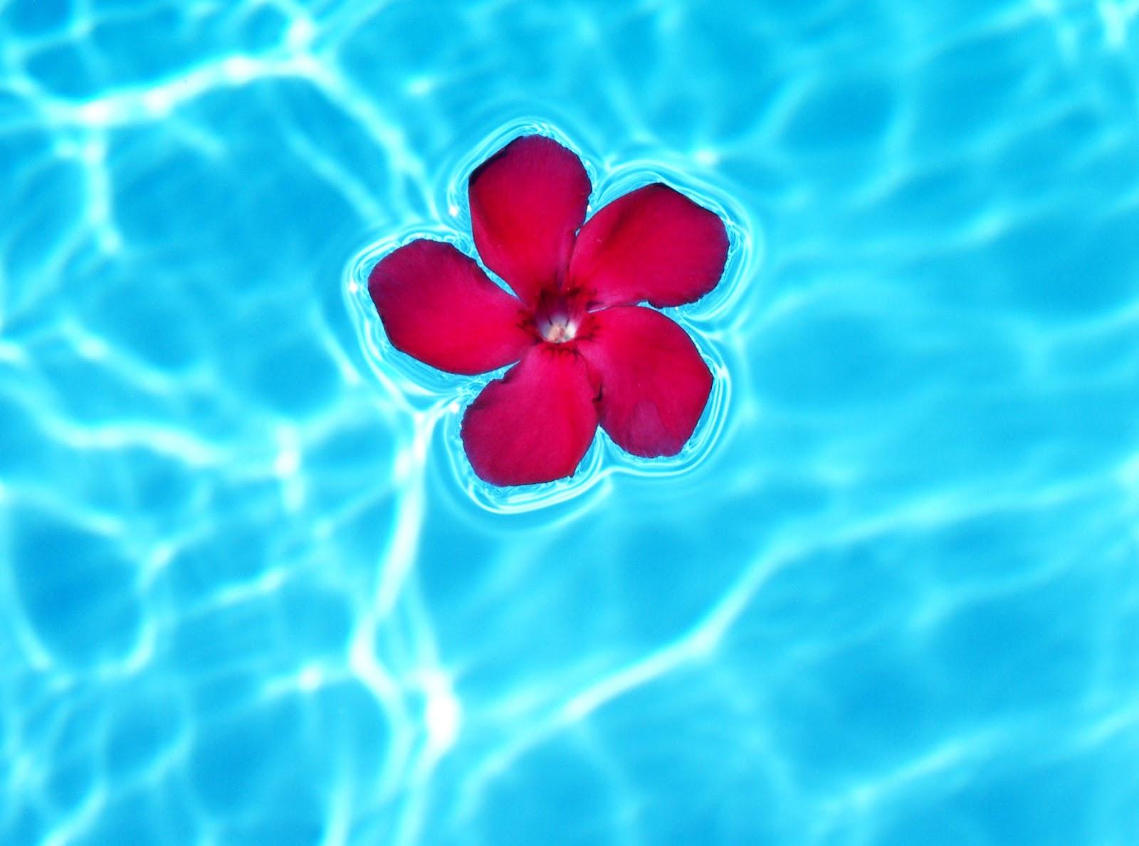 Questions pratiques sur la vidange piscine hivernage piscine - Comment vider une piscine ...