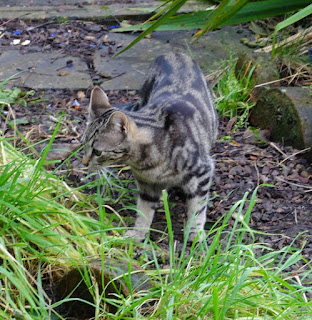 A young cat exploring