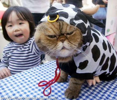 Cat dressed in cow.