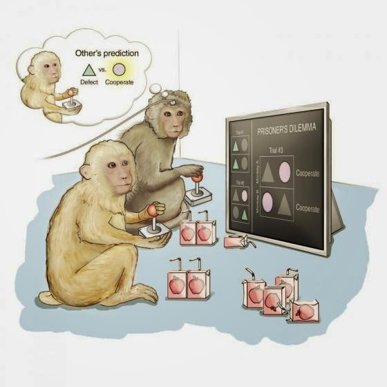 Shkencëtarët zbulojnë pjesën e trurit që Parashikon Mendimet dhe Synimet e të tjerëve