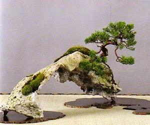 """<img src=""""bonsai12.jpg"""" alt=""""foto bonsai"""">"""