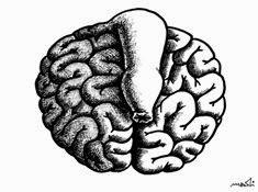 females  brain