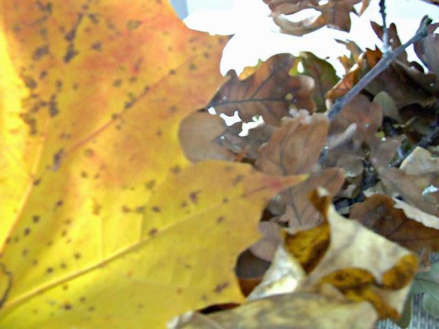 jesienne dekoracje liście