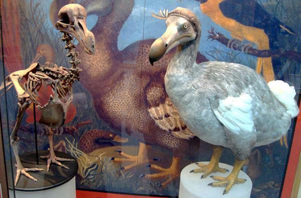 Burung Dodo