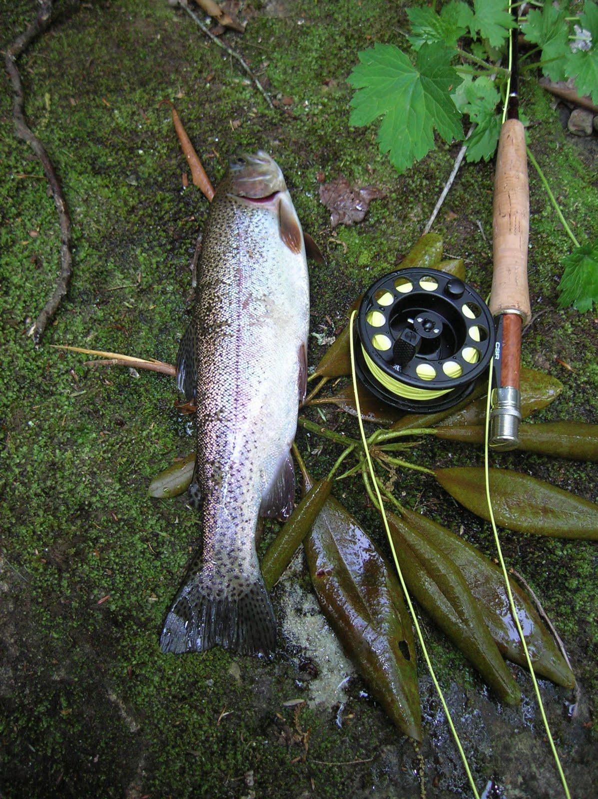 Foothillsoutdoors western north carolina fly fishing trail for North carolina trout fishing