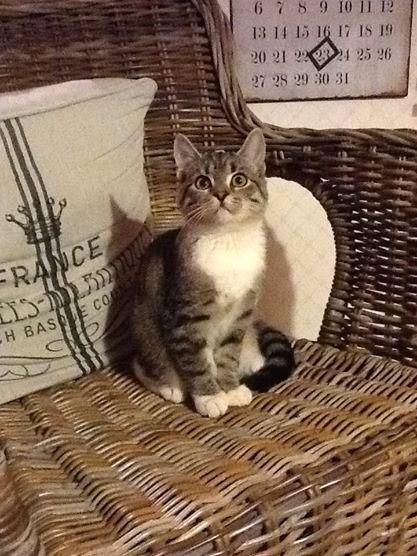 O en liten kattjej