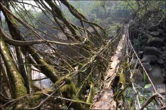 Nature S Marvel Living Root Bridges Of Cherrapunji