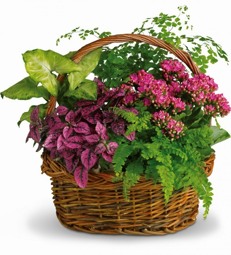 Canada Flowers Delivery and price include