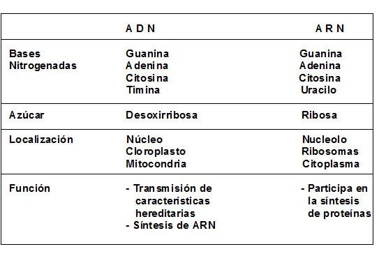 Diferencias del ADN y el ARN