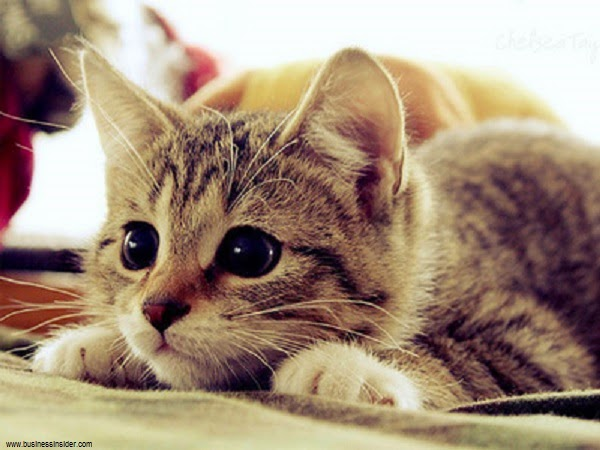 Photos de Chats mignons