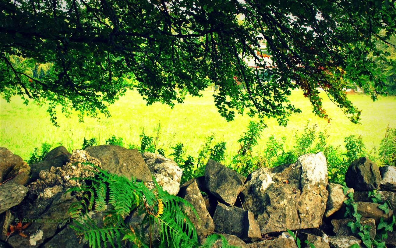 green leaves, stone wall, summer light
