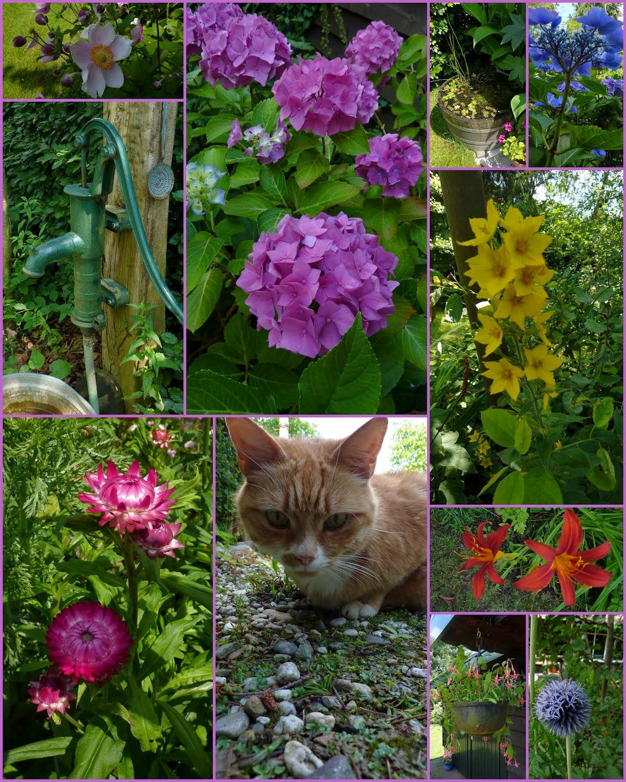 Mijn tuin 2014