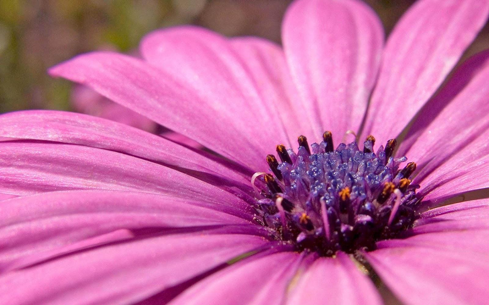 tulpen achtergrond met een - photo #26