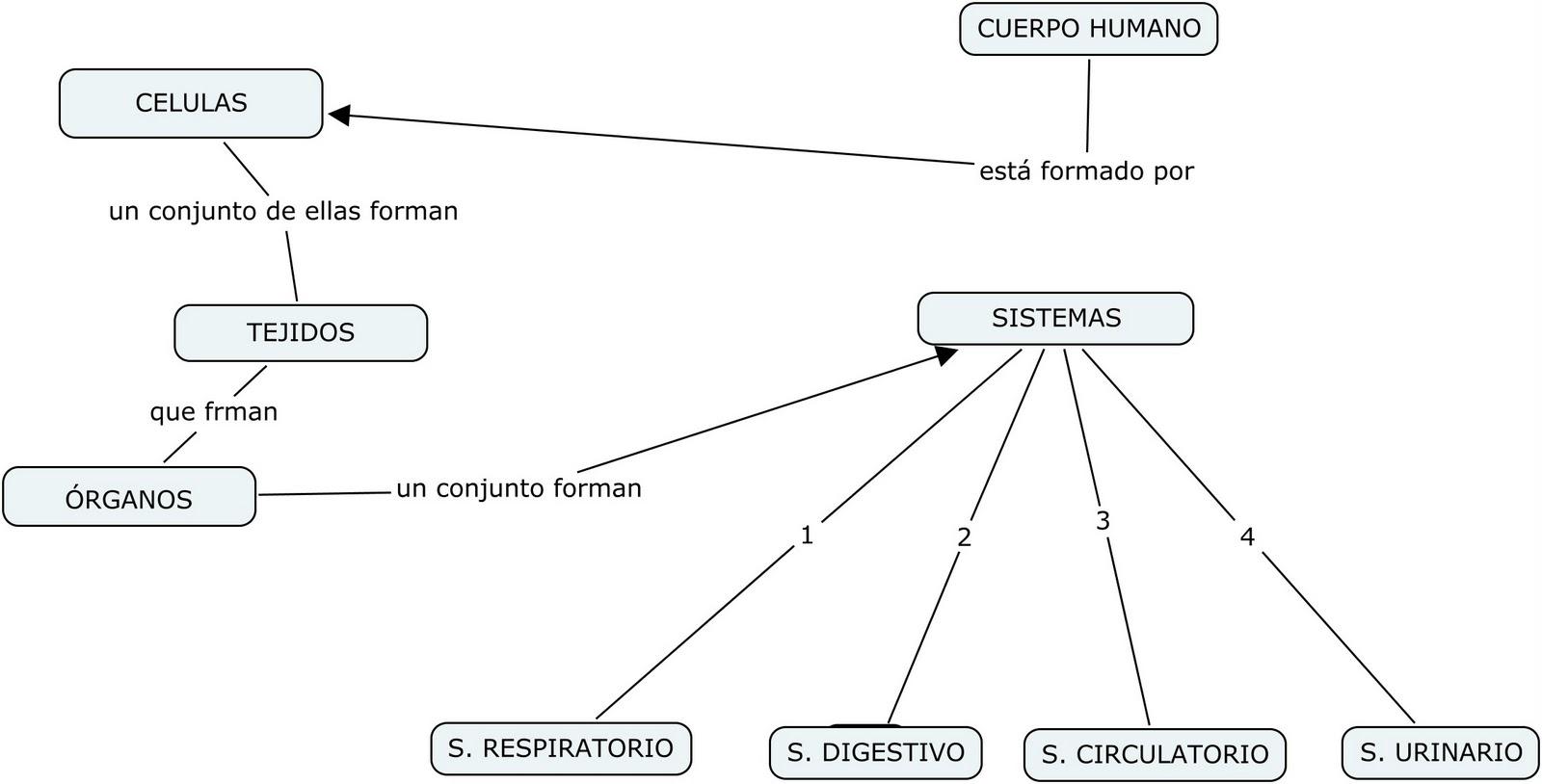 Reforzando ciencias naturales: Mapa conceptual cuerpo humano