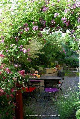 Die einmalblühende Ramblerrose