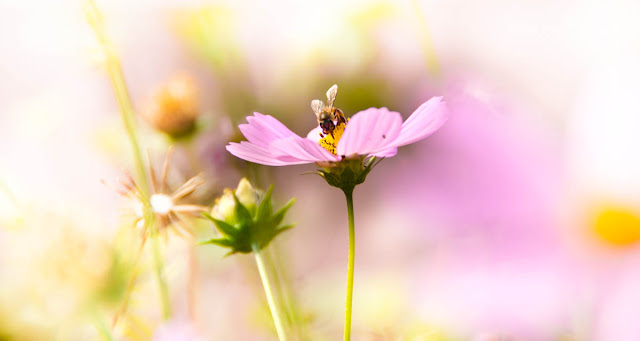 The flower and the bee 2 | Nikon D300 & Nikon 80-200mm f2.8