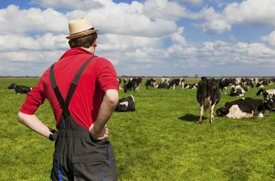 Ide usaha sampingan bidang peternakan menjanjikan image