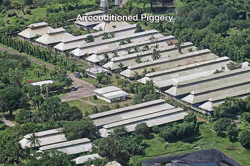 The Allegedly 10-Hectare property of Jejomar Binay for his Piggery