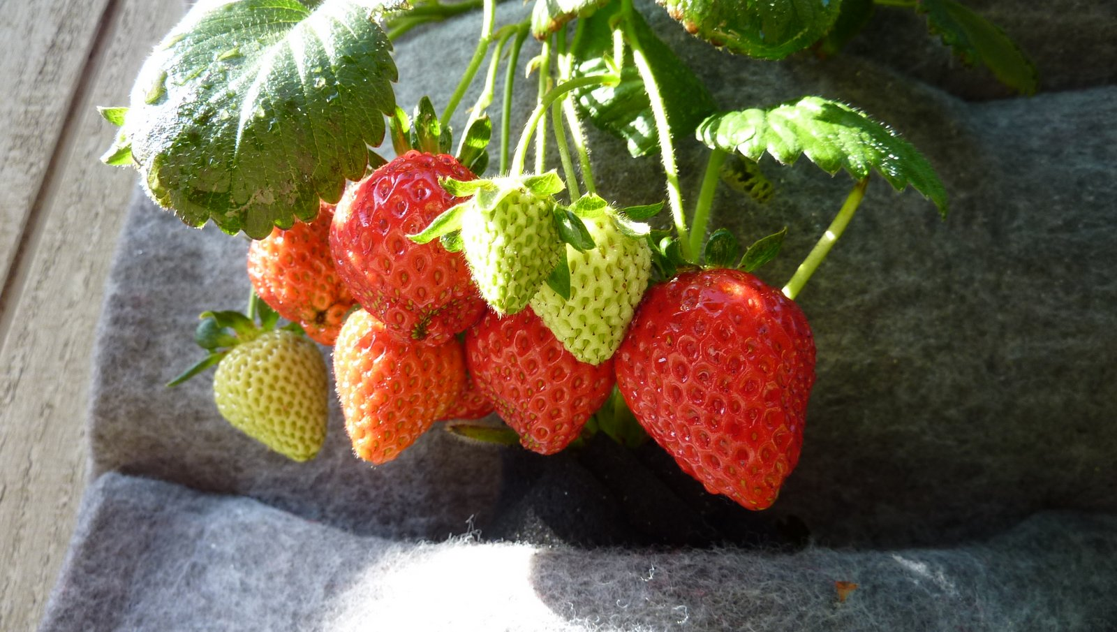 Plants On Walls Vertical Garden Systems Strawberry Walls
