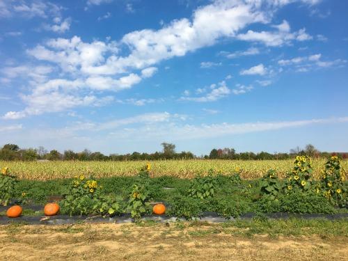 McGarrah's Pumpkin Patch in Northwest Arkansas