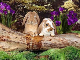 conejo con largas orejotas