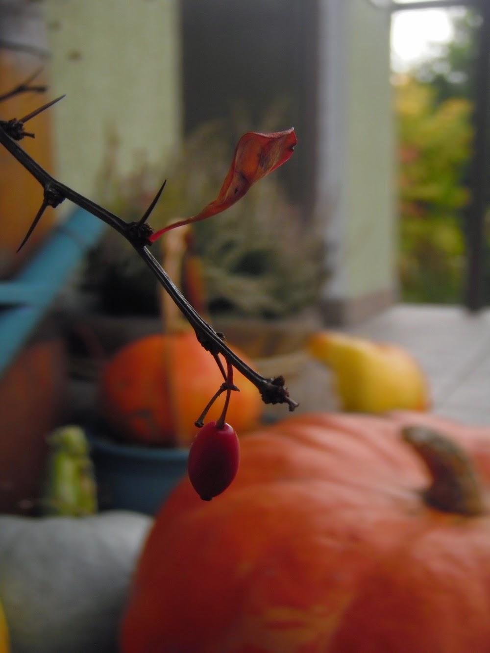 W Kalinowie jesień