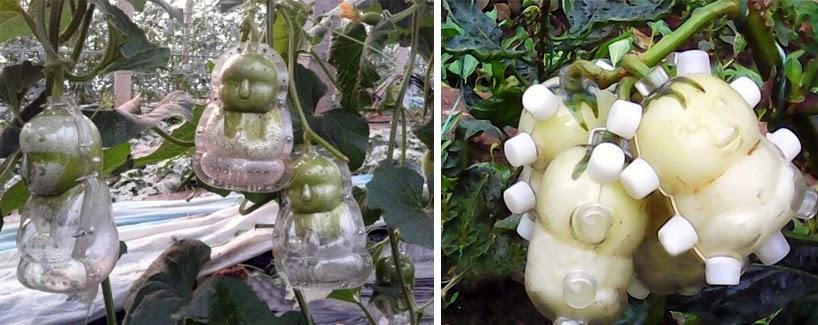 Peras con Forma de Bebe, Alteraciones de la Naturaleza por el Hombre