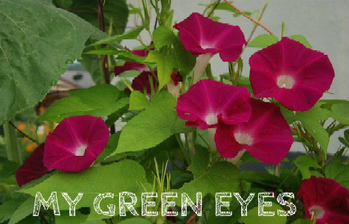 My Green Eye's
