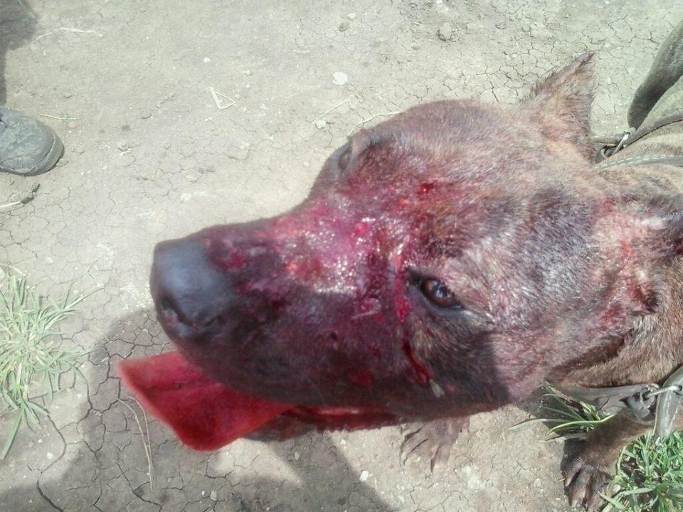 repudian pelea de perros cierran cuenta en facebook