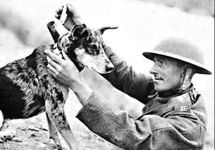 Tommy el perro soldado