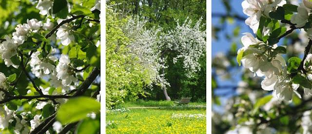 Park med blomstrende træer
