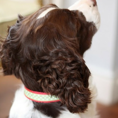 tutorial for DIY handmade dog collar from Think Crafts