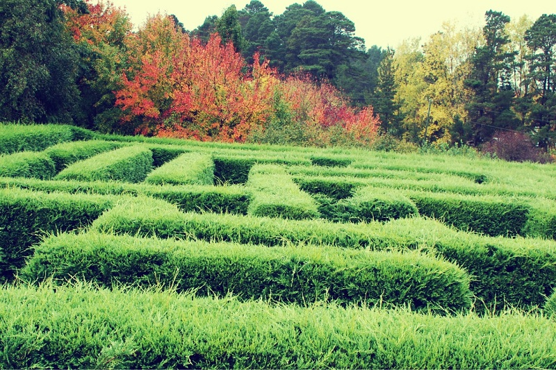 nature, photography, travel, maze
