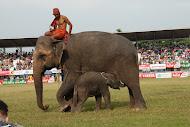 คนเลี้ยงช้าง 2