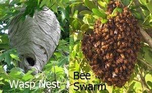 Vancouver Swarm Catchers