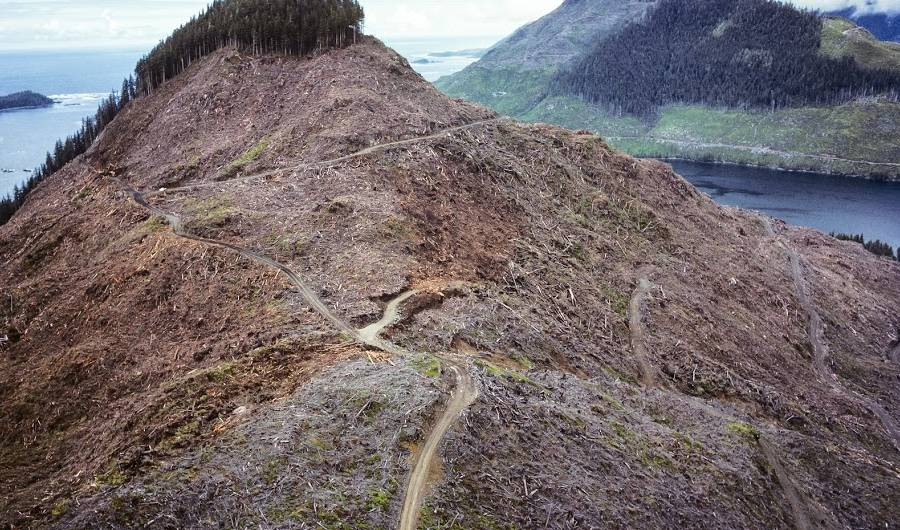 Image result for 11 Thought Provoking Images Show What Humans Are Really Doing To The Planet