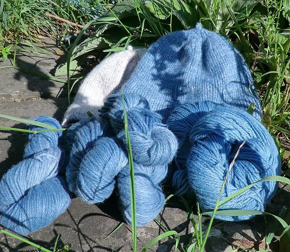 Blue Face Paint Woad Plant