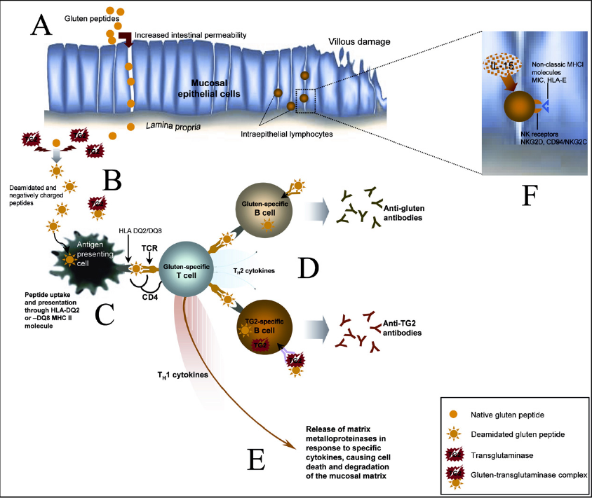 what-is-biochemistry-behind-gluten-consumption?