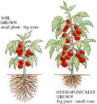 Indoor Gardening Hydroponics at Sloat Garden Center Sloat