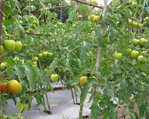 Tips Mengembangkan Bisnis Pertanian