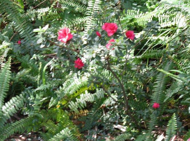 Bwana Blossoms - Bwana Blossoms
