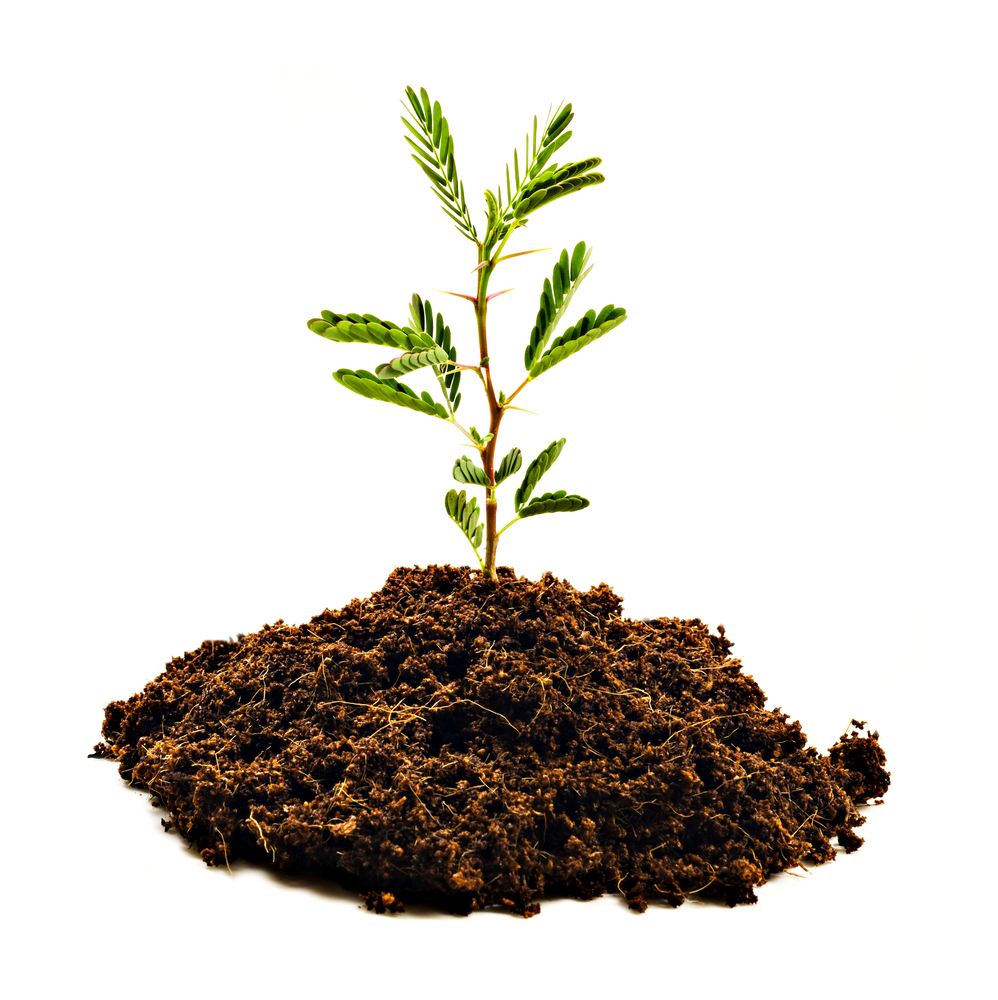 Asociacion juan de goyeneche for Arboles para plantar en invierno