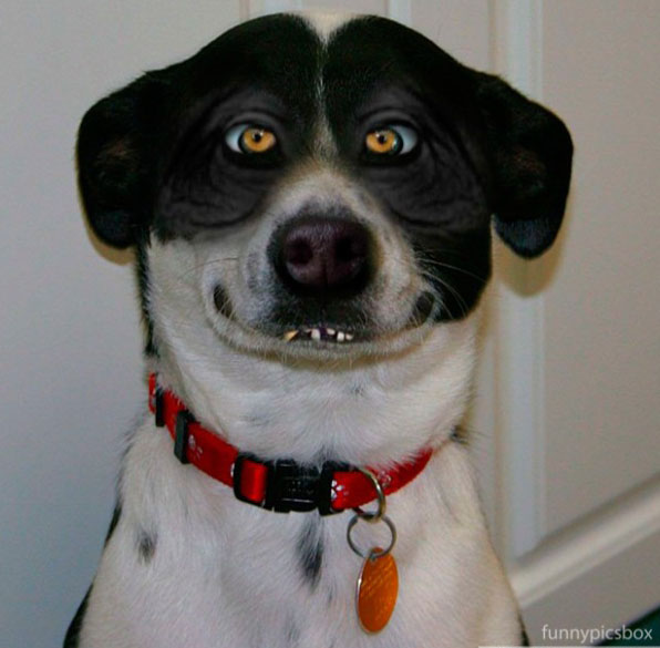 Funny image funny dog face pictures funny dog face pictures voltagebd Image collections