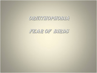Ornithophobia, fear of birds
