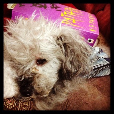 Murchie lays curled into a tight ball atop a red tapestry comforter. Behind him is a mass market paperback copy of Pattern, featuring a silhouette of crows in flight against a purple background.
