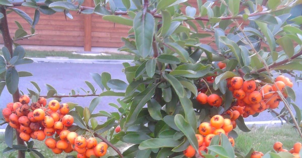 Mangez des plantes ornementales par hildegarde olduva for Jardin hildegarde