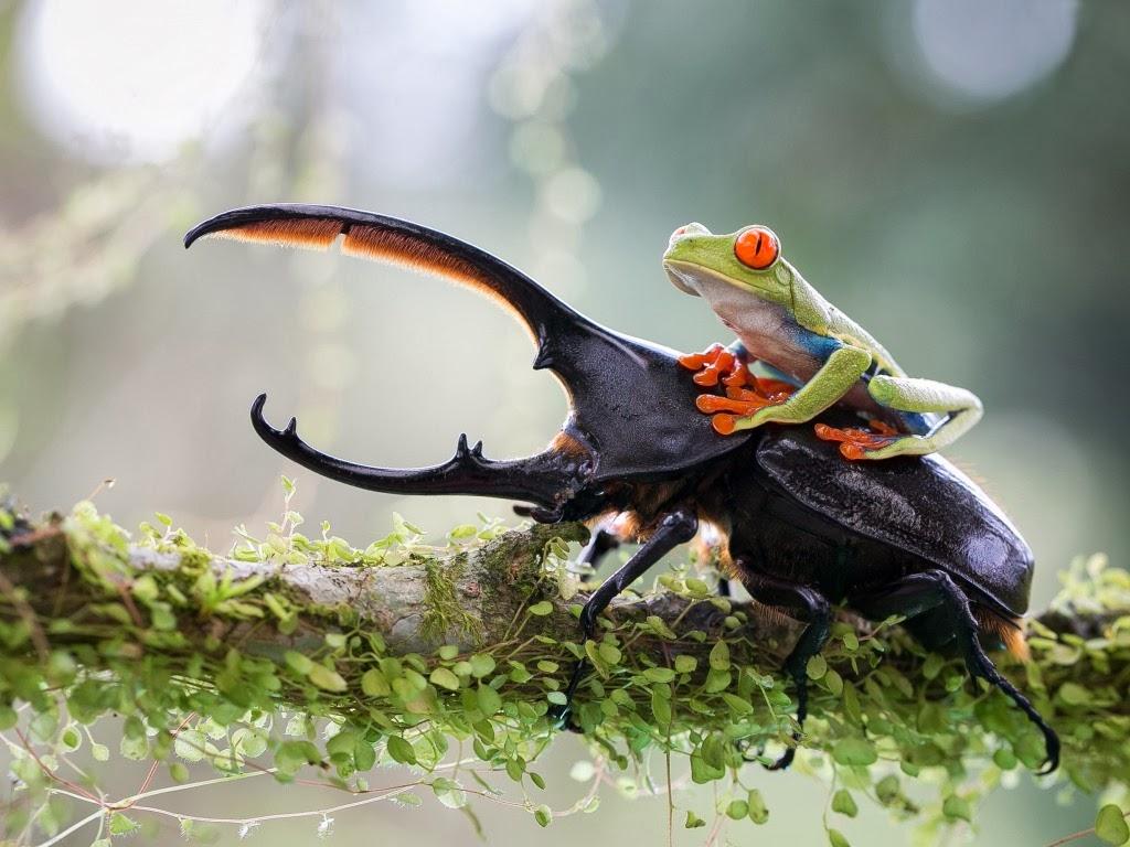 """<img src=""""http://1.bp.blogspot.com/-e-pUZDkd-ck/UtmFdY0HfOI/AAAAAAAAIoM/d3ZTem78x14/s1600/animal-wallpapers-frog-friends.jpg"""" alt=""""friends"""" />"""