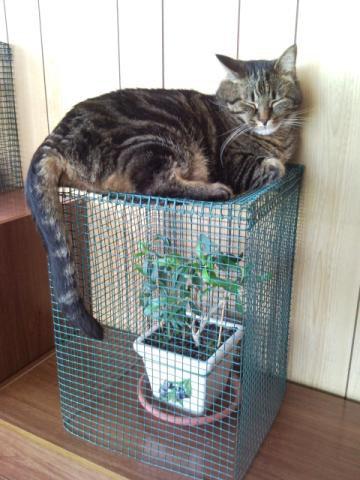 Gatti e co a mici per la pelle come evitare che il - Come fare il bagno al gatto ...