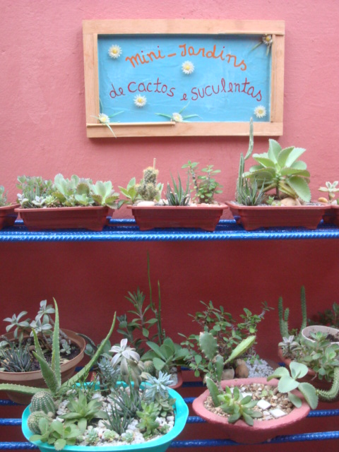 mini jardim de parede:Meu Jardim é Assim: Prateleiras para os mini-jardins de cactos e